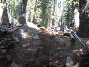 Big logs dragged to along side the trail to be blocked.