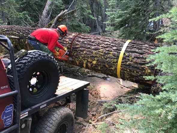 "40"" log cut 2"